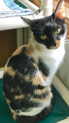 Brown County Humane Society Cat Of The Week 11 28 16